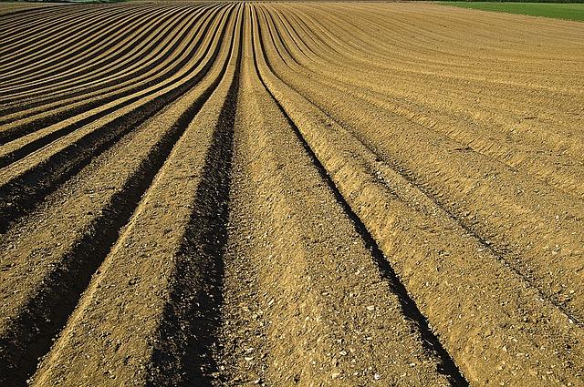 アフィリエイトは農業。あなたはどんな種をこの世界にまきますか?